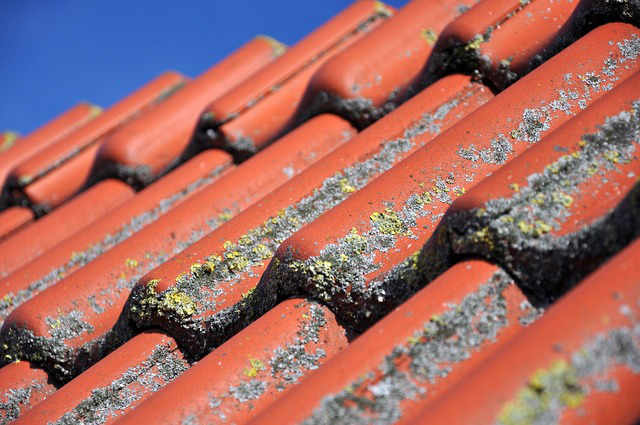 get rid of roof moss on your home